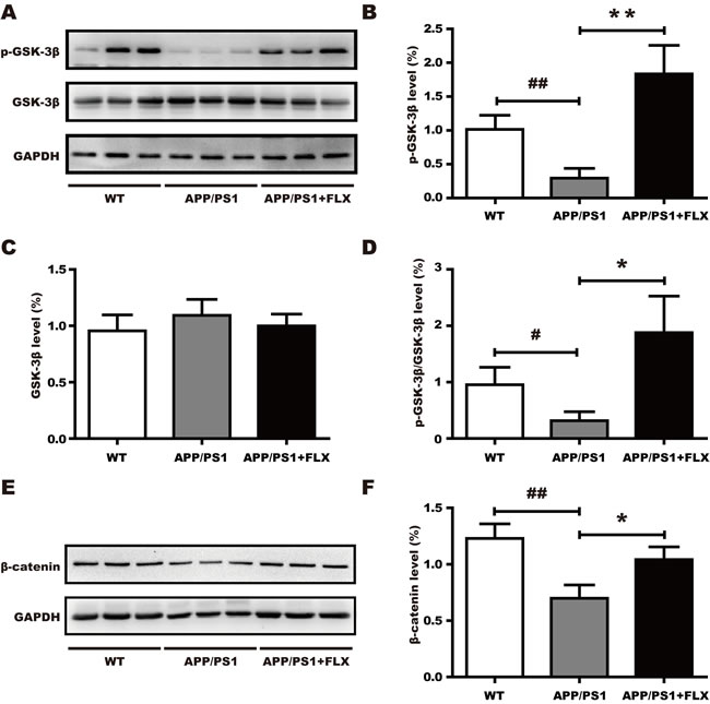Involvement of the canonical Wnt signaling pathway in the effect of FLX.