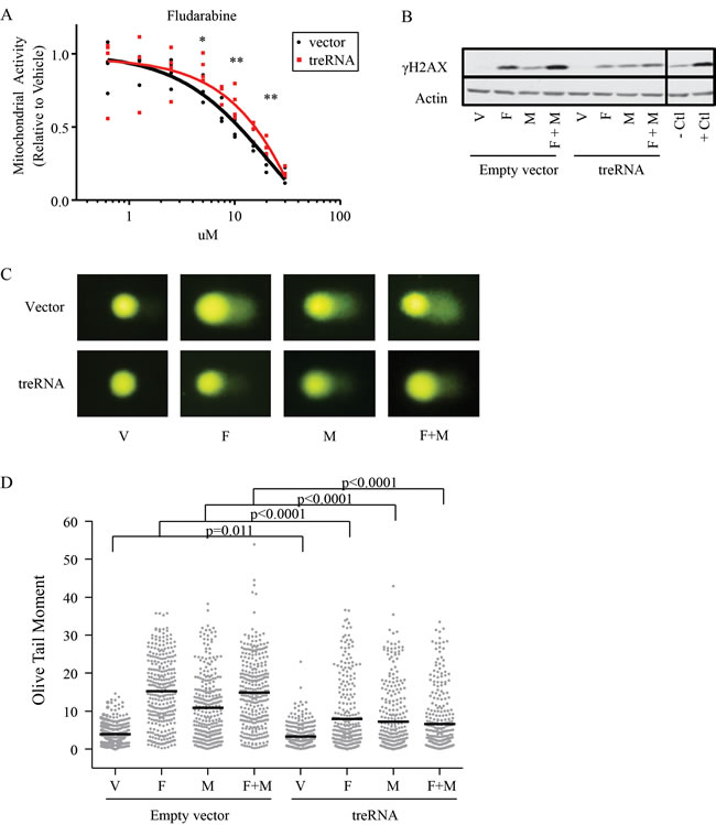 TreRNA expression impairs DNA damage following treatment with fludarabine and mafosfamide.