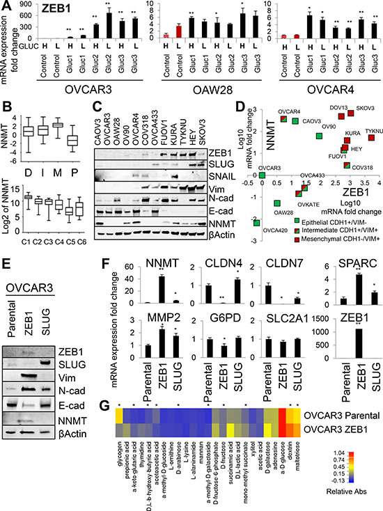 ZEB1 is an upstream regulator of NNMT and mediator of glucose independence.