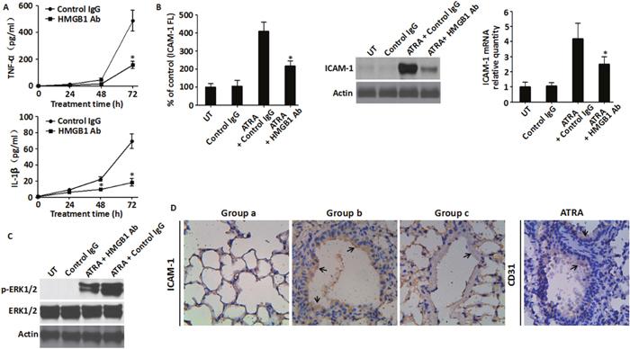 Inhibition of HMGB1 level blunted HMGB1-mediated inflammatory response.