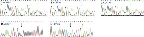Sanger chromatograms of mutations.