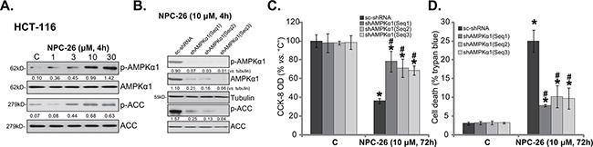 NPC-26-induced killing of CRC cells requires AMPK activation.