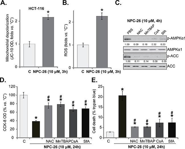NPC-26 disrupts mitochondrial function, causing AMPK activation.