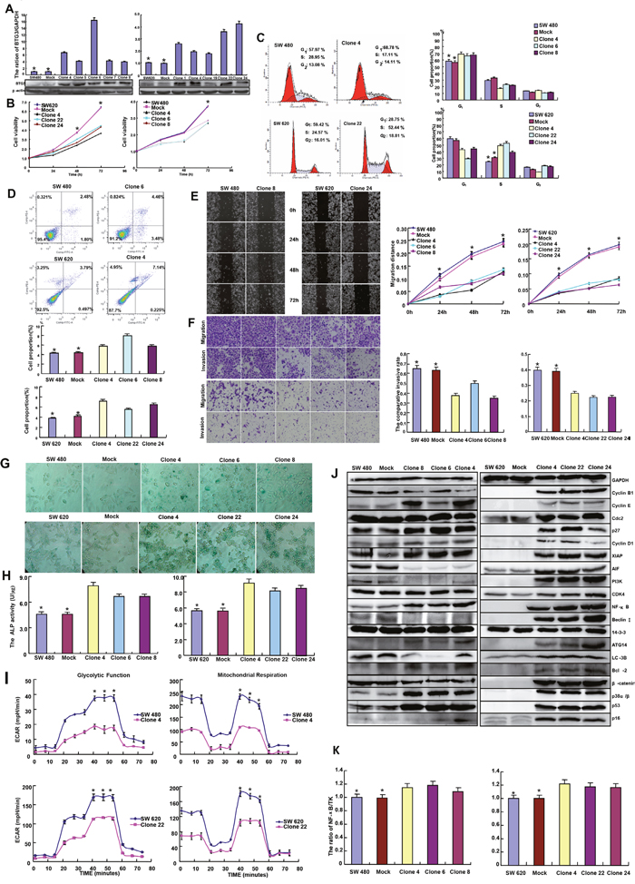 The effects of BTG3 overexpression on the phenotypes and their relevant molecules of colorectal cancer cells.