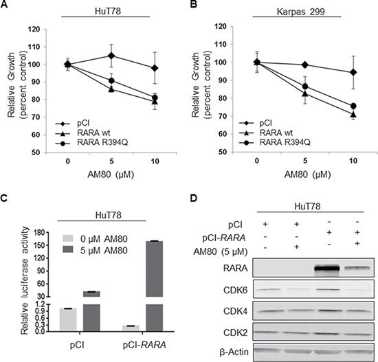 RARA overexpression increases chemosensitivity to AM80.