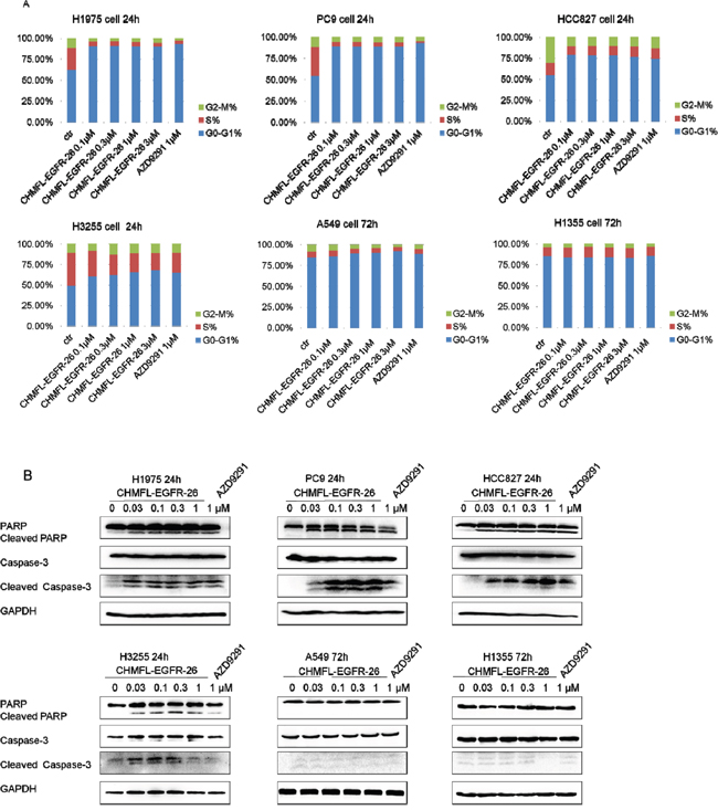 Effect of CHMFL-EGFR-26 on cell cycle progression and apoptosis in EGFR mutants/wt NSCLC cell lines.