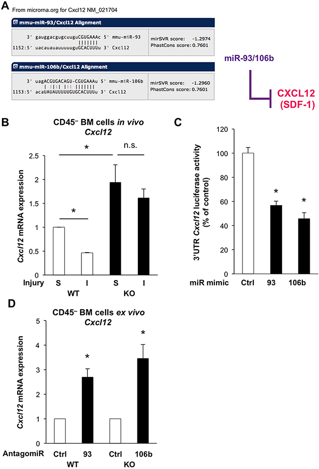 The miR-25-93-106b cluster is a negative regulator of Cxcl12.