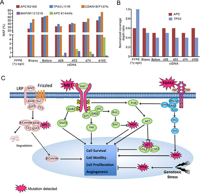Targeted NGS with pan-cancer gene panel identified multiple genetic alterations potentially contributed to patient's drug resistance.