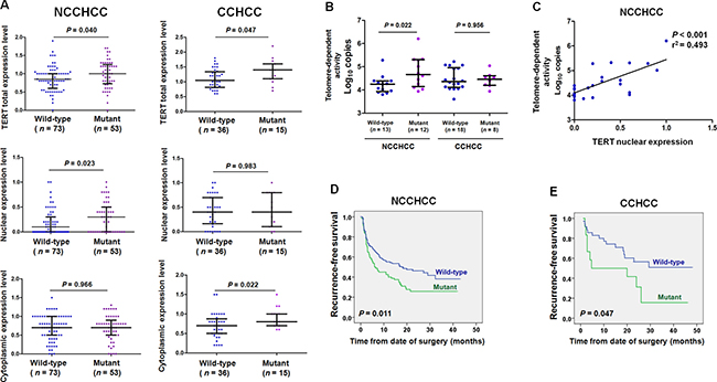 TERT promoter mutations correlated with telomere-dependent activity in NCCHCC and elevated TERT cytoplasmic expression in CCHCC.