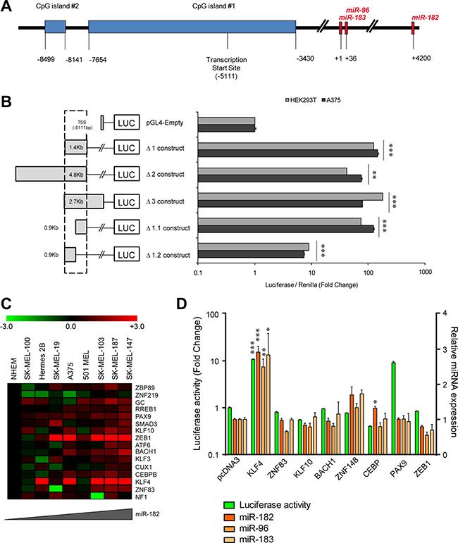 KLF4 regulates the miR-182 cluster promoter.