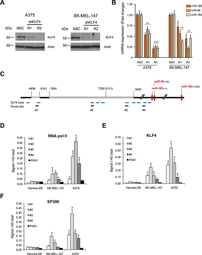 KLF4 controls miR-182 expression in melanoma cells.