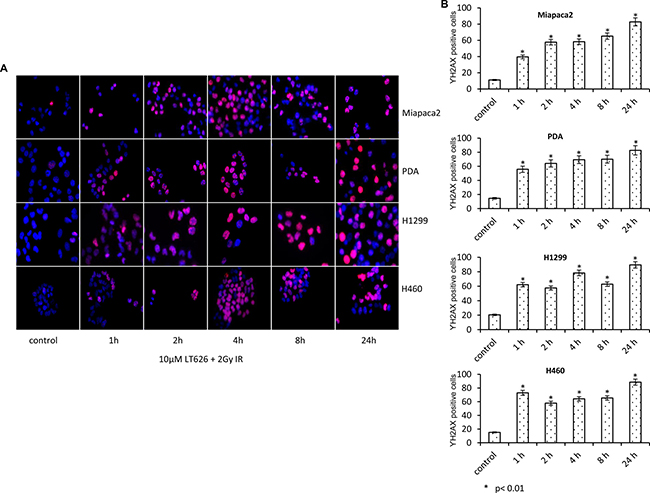 Increased expression of γH2AX after combination treatment.