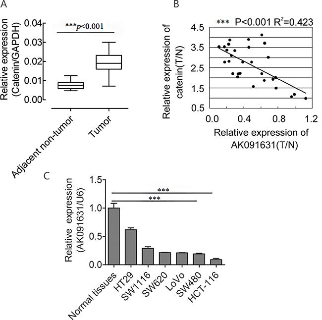 β-catenin up-regulates and is negatively associated with AK091631 (lncRNA-BCAT1) mRNA expression in CRC samples and 6CRC cells.