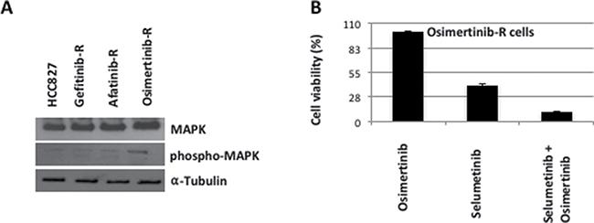 Western blot analysis on protein lysates and proliferation assays on cancer cell lines established in vitro from the only one HCC827-xenograft tumor resistant to the sequential treatment with gefitinib, afatinib and osimertinib, harboring the KRAS G12D acquired mutation.
