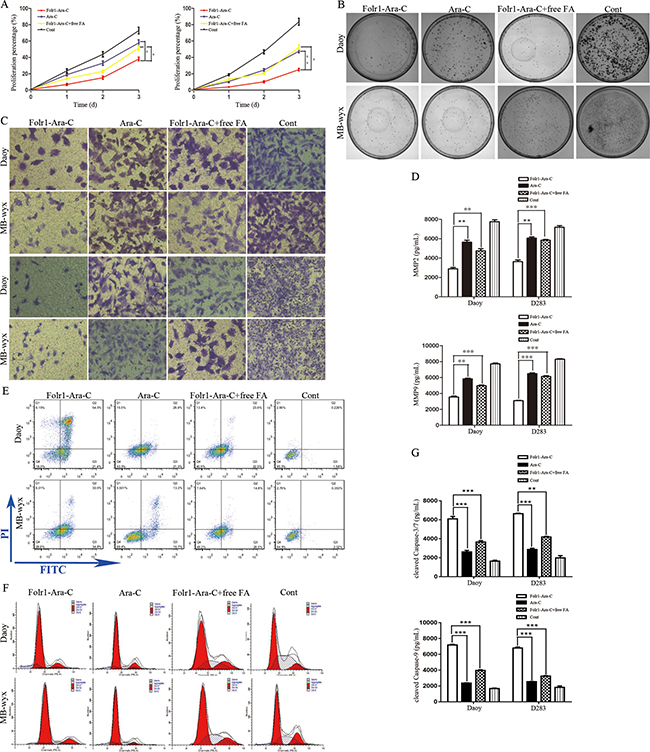 Effects of Folr1-Ara-C on on the proliferation, mobility and apoptosis of MB cells.