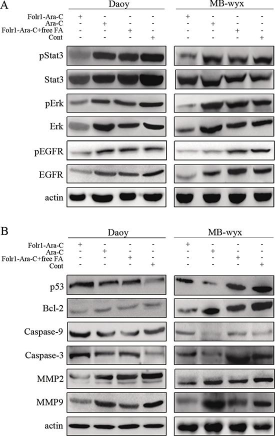 Molecular mechanisms of Folr1-Ara-C functions.