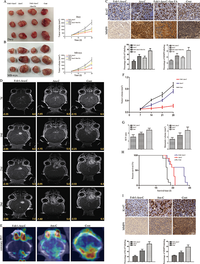 Application of Folr1-Ara-C on subcutaneous and intracranial xenografts derived from MB cells.