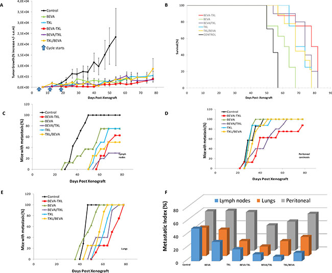 Monitoring tumor growth, survival and metastatic spreading in Expe-1.