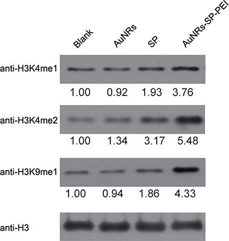 Inactivation of LSD1 causes similar changes of histone methylation in human BMSCs.