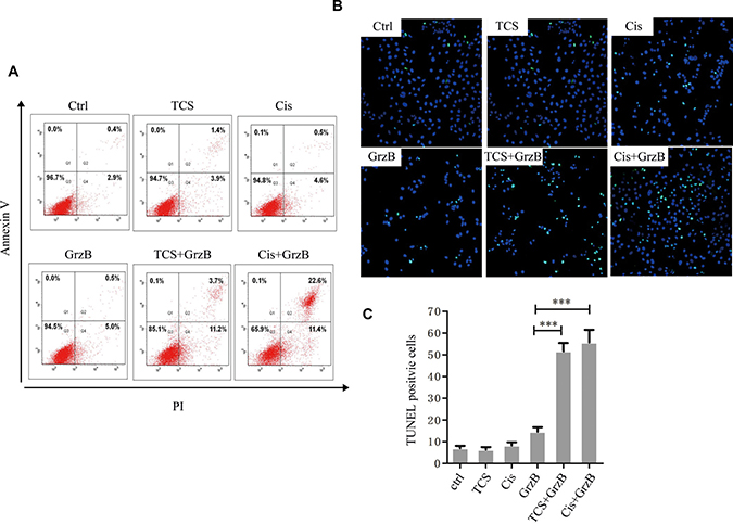 The in vitro inhibition of enzymatically active GrzB on cancer cells is greatly increased by TCS.