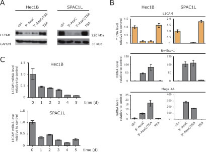 HDAC inhibitors fail to induce L1CAM down-regulation.