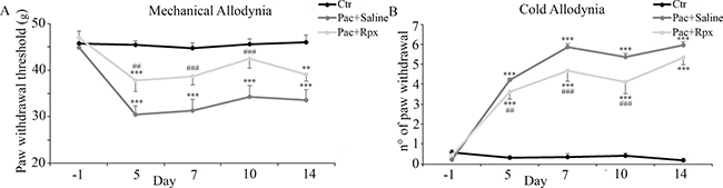 Effect of reparixin on paclitaxel-induced mechanical and cold allodynia: In control animals administered with paclitaxel vehicle i.p.