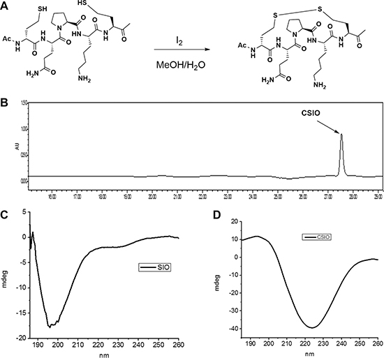 Synthesis and characterization of CSIO peptide.