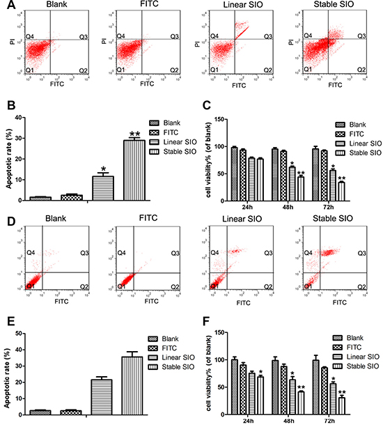 The strong cell penetration of stable SIO in A549 or H1299 cells inhibited cell proliferation and induced cell apoptosis.
