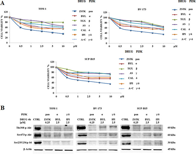 Cytotoxicity of PI3K isoform inhibitors and modulation of PI3K/Akt/mTOR pathway in TOM-1, BV-173 and SUP-B15 cell lines.