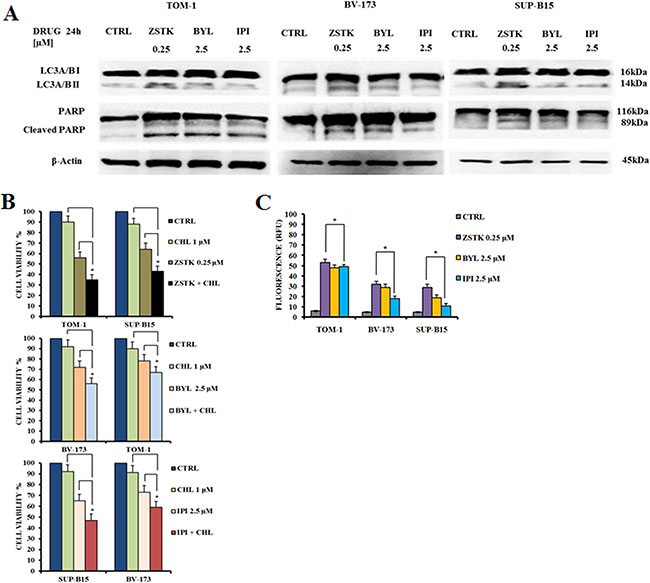 Selected PI3K isoform inhibitors induced autophagy and apoptosis in Ph+ B-ALL cell lines.