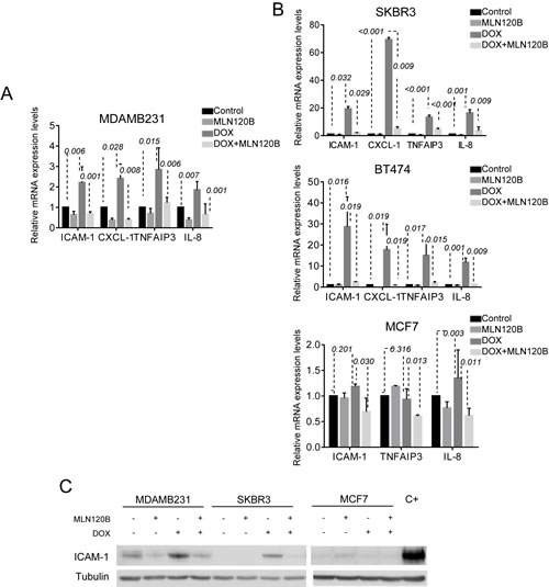 NF-кB -driven transcription by doxorubicin differs among breast cancer cells.