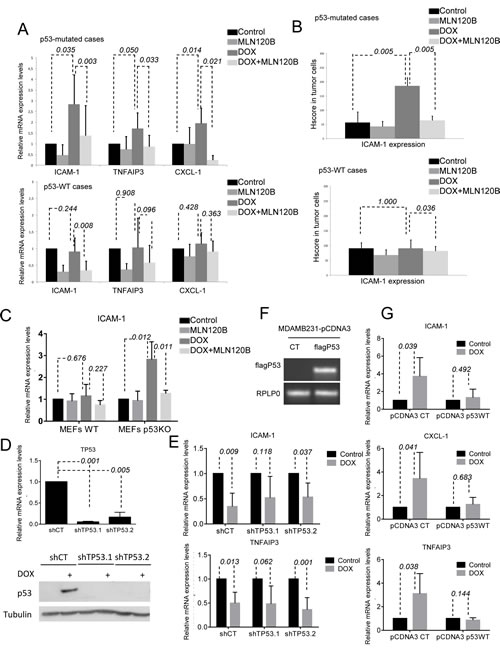 p53 deficiency is required for NF-кB-driven transcription induced by doxorubicin.