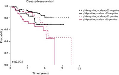Association between p53 and p65 nuclear localization and disease-free survival in breast cancer patients.
