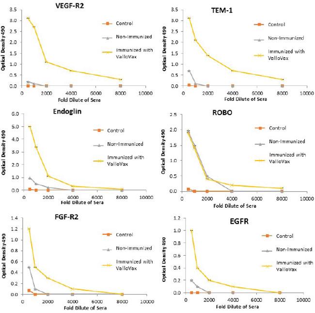 Antibody responses to tumor endothelial markers.