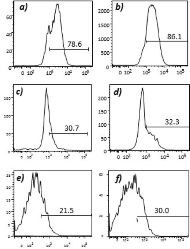 Expression of tumor endothelial markers on umbilical endothelial cells prior to interferon gamma treatment.