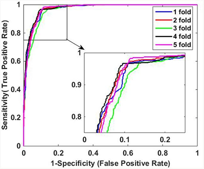 ROC curves of SVM-based method on Human data set.