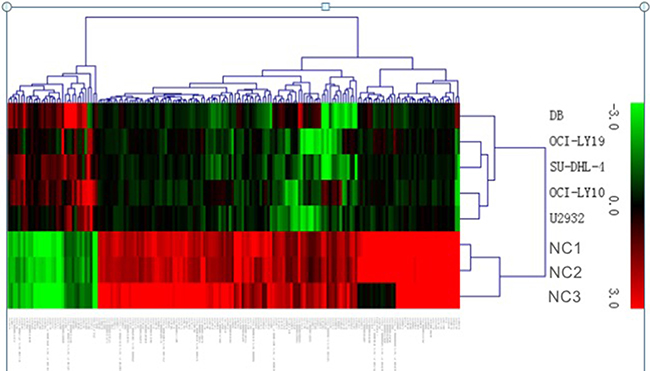 Heat map showing differentially expressed lncRNAs from DLBCL cells compared with three normal B cells.