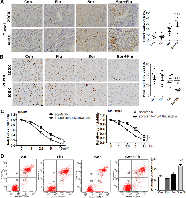 Synergistic cytotoxicity of sorafenib and fluvastatin against HCC.