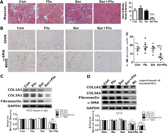 Effects of sorafenib and fluvastatin on liver fibrosis and HSCs activation.