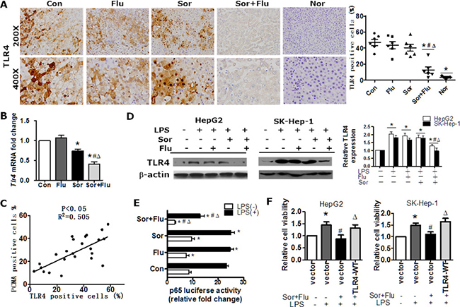 The combination treatment significantly inhibited TLR4 expression in HCC.