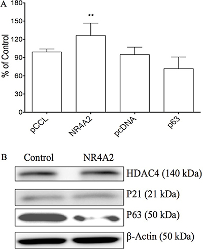 The effects of NR4A2 on cell proliferation and other gene expression in HTB-52 cells via over-expressing NR4A2.