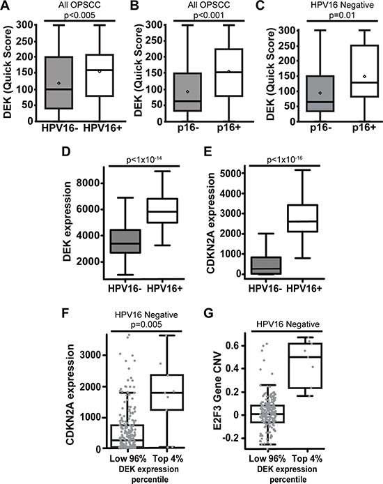 DEK expression correlates with p16+ status in both HPV+ and HPV– OPSCC.