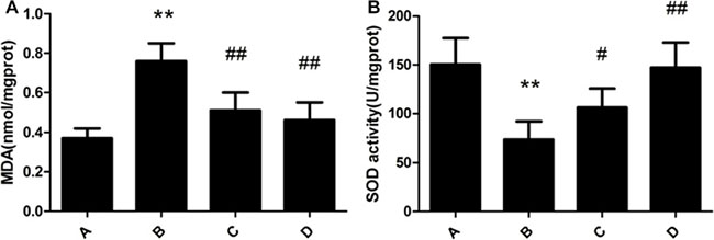 Effect of meloxicam on changes of liver MDA content and SOD activity in chronic Al-overload rats.
