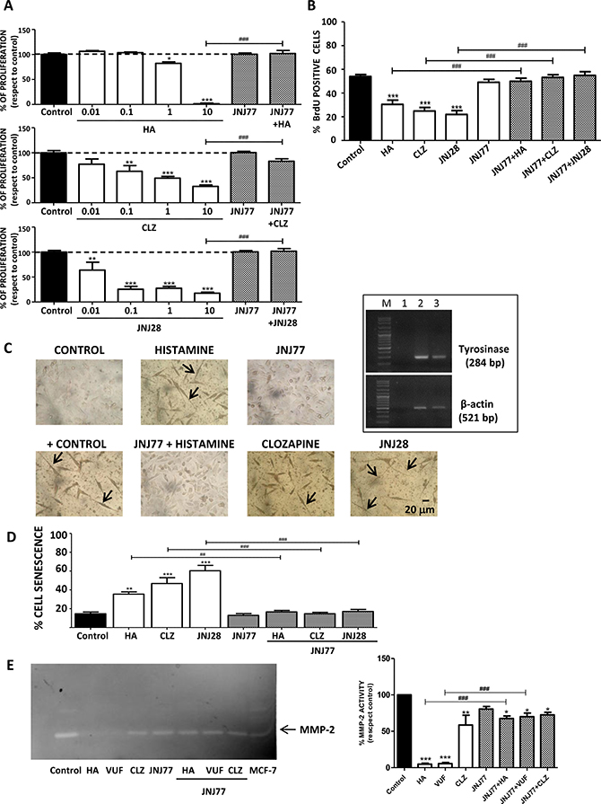 H4R-induced biological responses in 1205Lu cells.