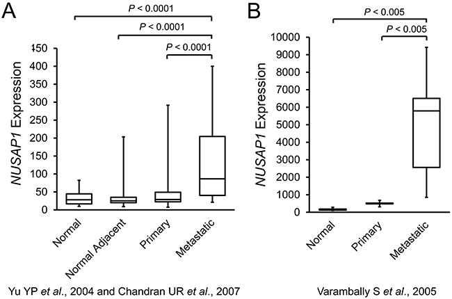 NUSAP1 transcripts are increased in patient metastatic prostate tumors.