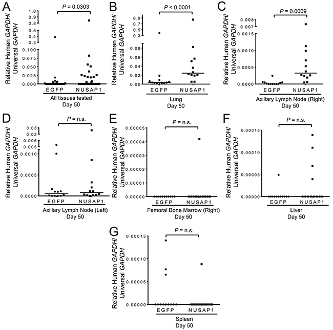 NUSAP1 overexpression significantly increases metastases in a PC-3-luc2 xenograft model.