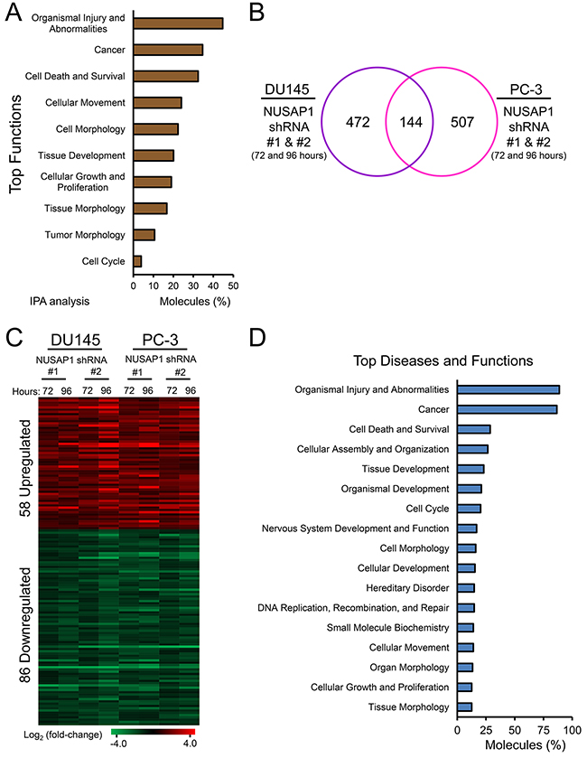 NUSAP1 overexpression or knockdown leads to differentially expressed genes associated with cancer progression.