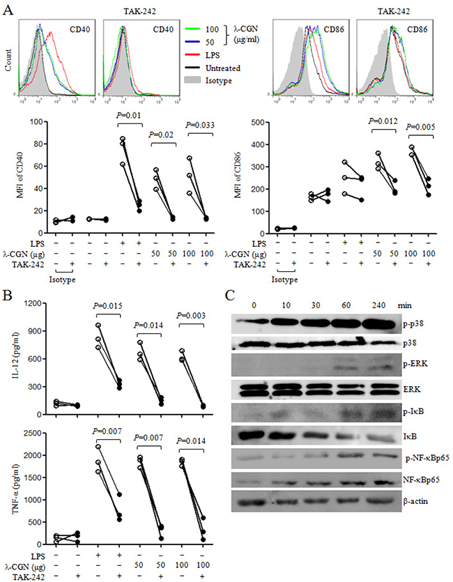 λ-CGN promotes DC maturation and cytokine production through TLR4 signaling pathway.