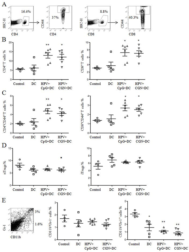 HPV DC-based vaccines activated CD4+ and CD8+ T cells and decreased nTregs and MDSCs.