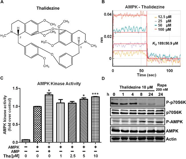 Thalidezine binds and activates AMPK in vitro.